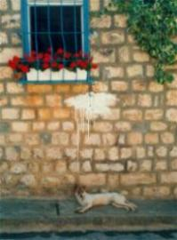 Dog in Safed